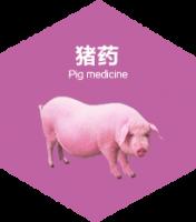 猪感冒发烧怎么治疗?